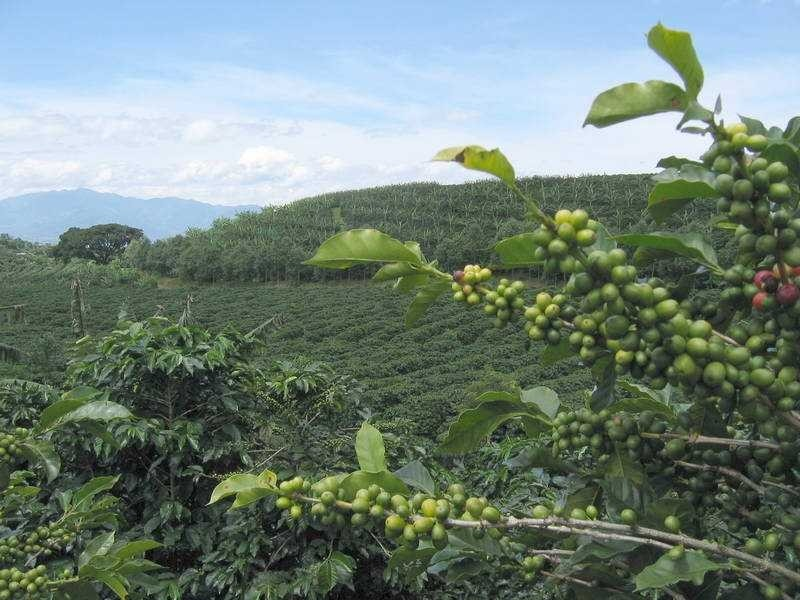 Кофе из Перу
