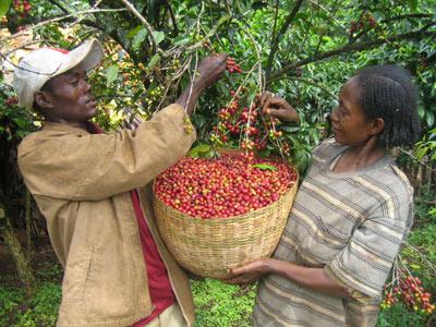 кофе из Эфиопии